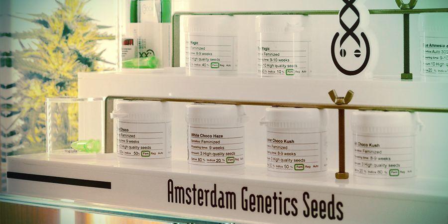 SEEDBANK OF THE MONTH: AMSTERDAM GENETICS