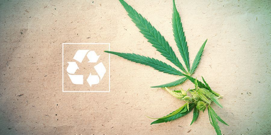 Cannabis And The Environment