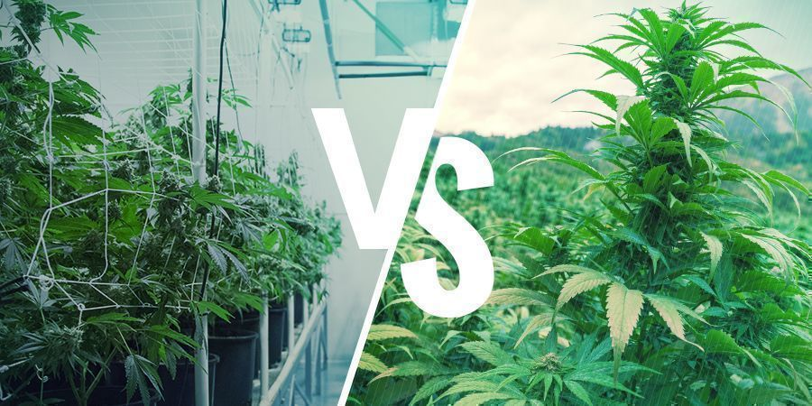 Heirloom Vs. Landrace Cannabis: The Finer Points