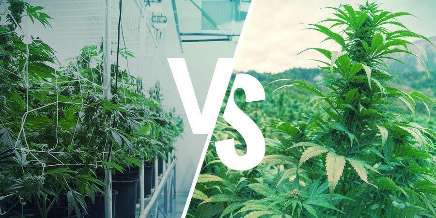 Heirloom Vs. Landrace Cannabis: The Finer Points