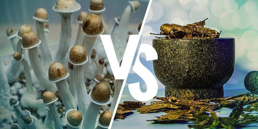 Psilocybin Vs Dmt: Similarities And Differences