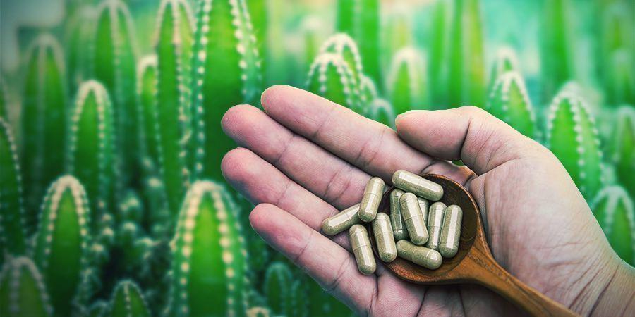 Meskalin Ist In Mikrodots Oder Mikrodosen Erhältlich