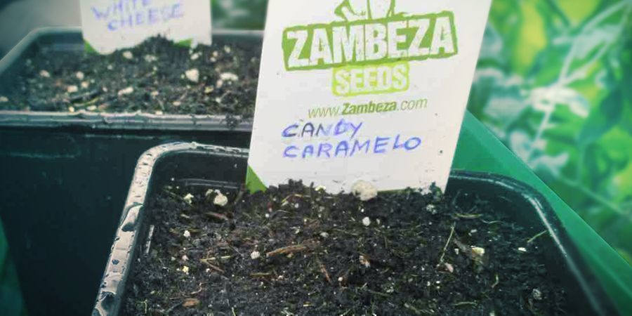 WHY CHOOSE ZAMBEZA SEEDS?