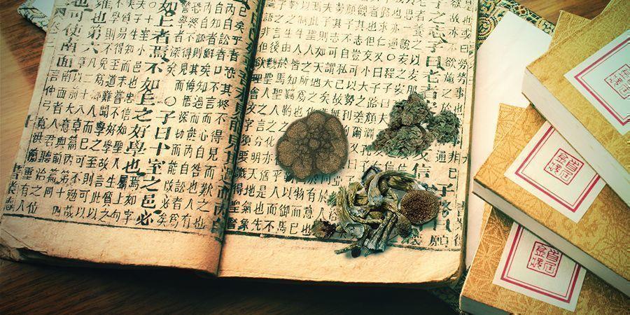 Cannabis, Mushrooms, Ayahuasca, Peyote — Ancient Medicines And Spiritual Guides