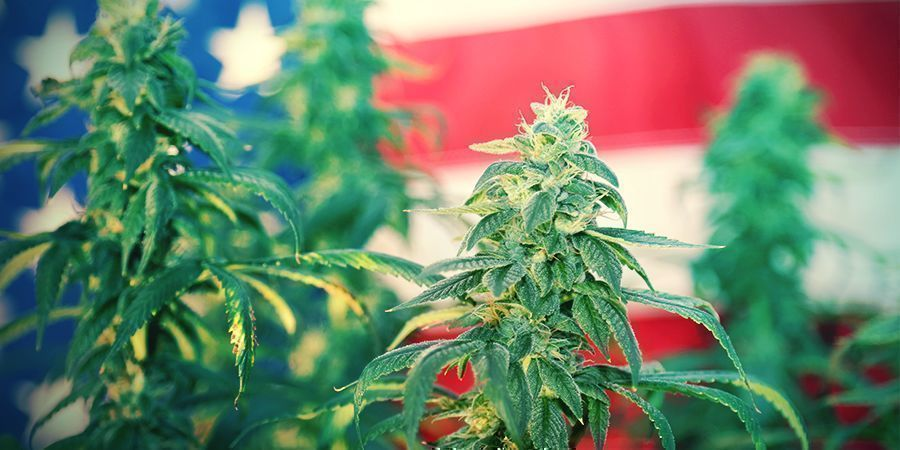 STARS, STRIPES, AND STRAINS