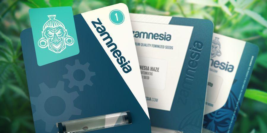 Zamnesia Seeds: Bescheidene Anfänge