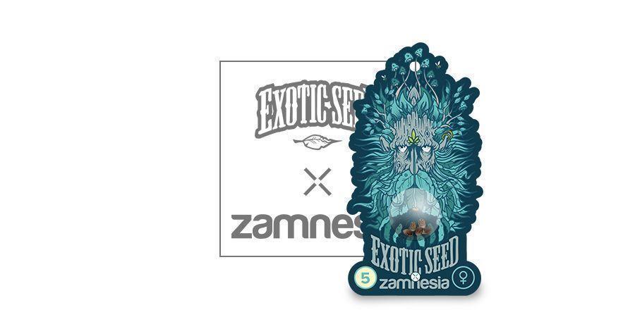Black Zkittlez (Exotic Seed X Zamnesia) Feminized