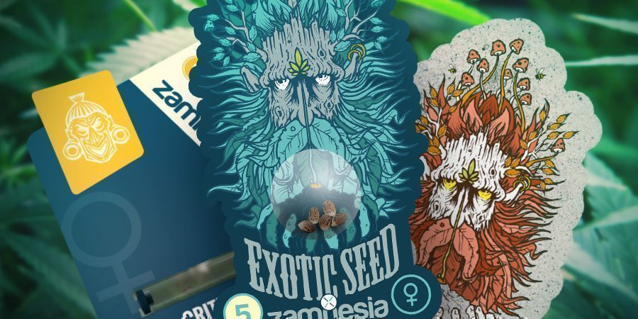 ZAMNESIA AND EXOTIC SEED: A POTENT COLLABORATION