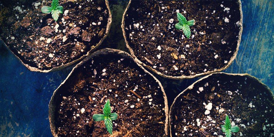 Germinate Directly In Your Pots