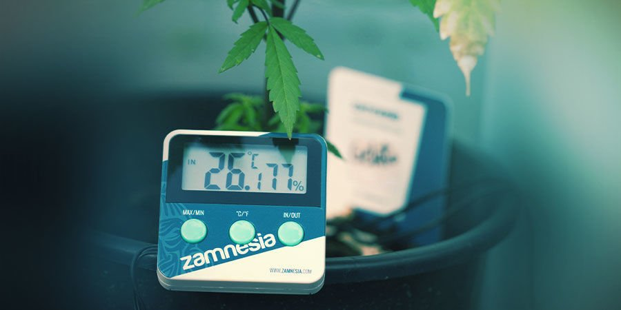 Cannabis Grow Room: Temperature And Humidity Control