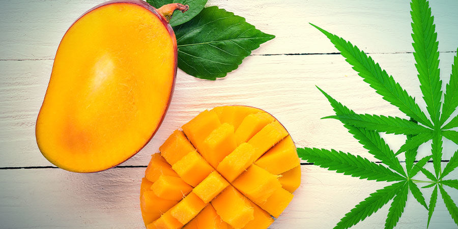 MANGO HAZE: FLAVOUR AND EFFECTS