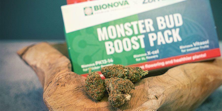 Was ist das Monster Bud Boost Pack?