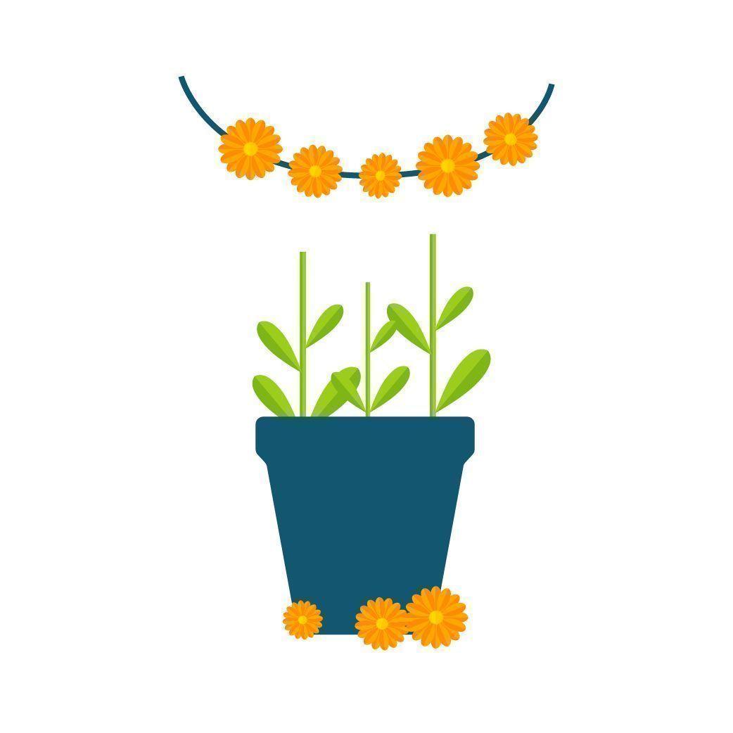 Besorge Dir Blüten