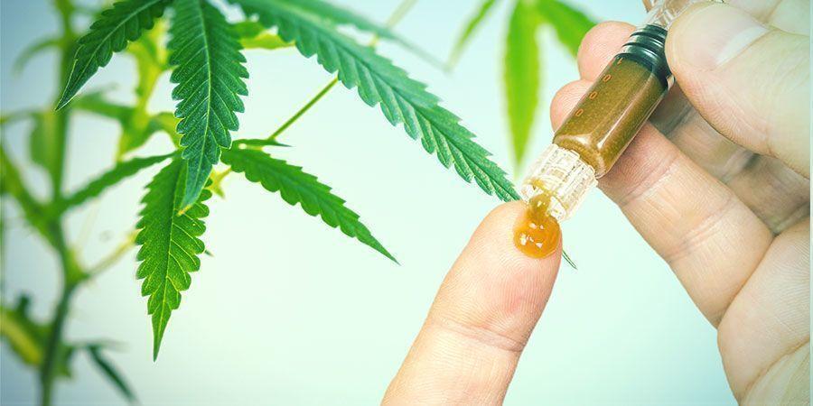 Die Nutzen von Cannabiswurzeln