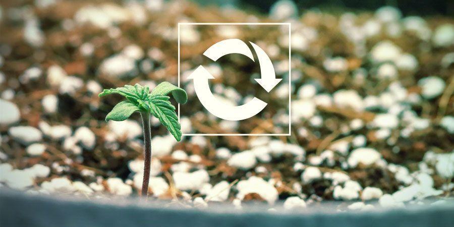 Wiederverwendbar - Produktiver Cannabispflanzen