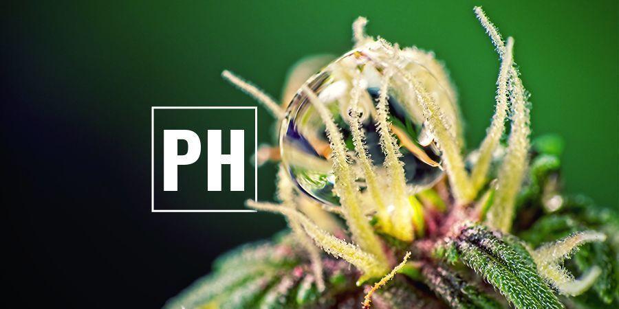 Cannabis PH-Werte Optimieren