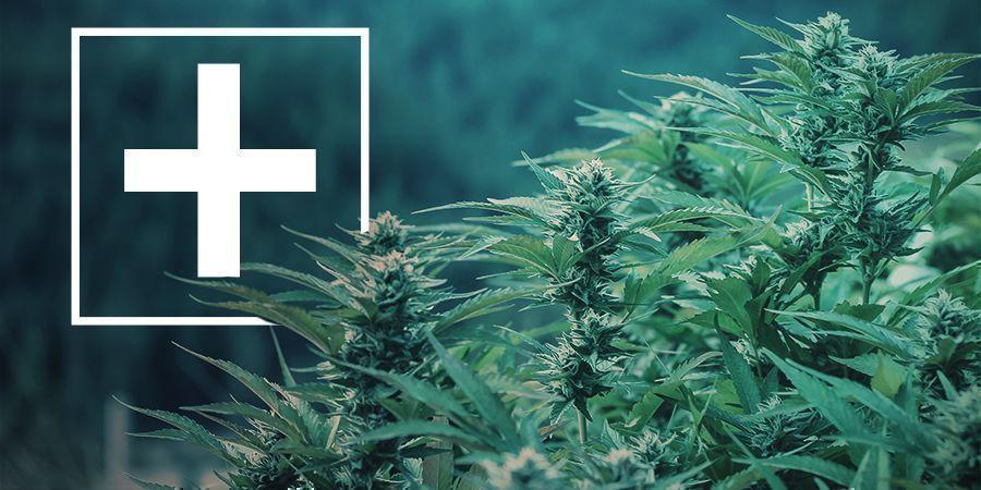 Vorteile schnell blühender Cannabissorten