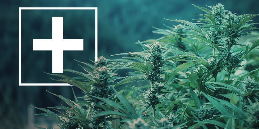 Advantages Of Fast-Flowering Cannabis Strains