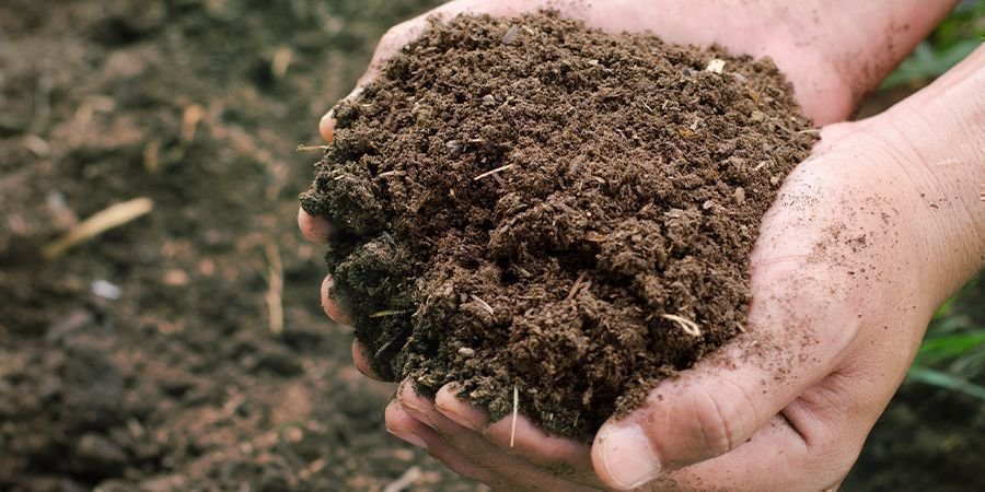 Dry And Fibrous Compost