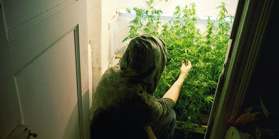 Cannabis in einer Abstellkammer anbauen