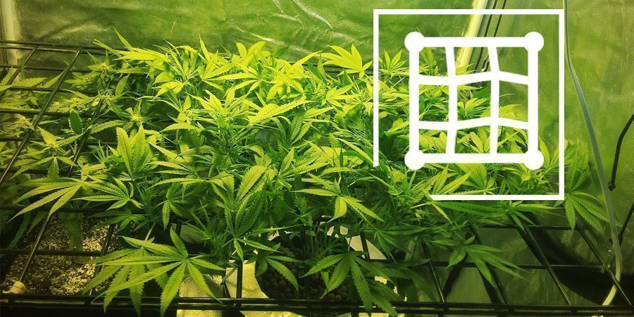 Techniques To Enhance Your Micro-Grow Yield