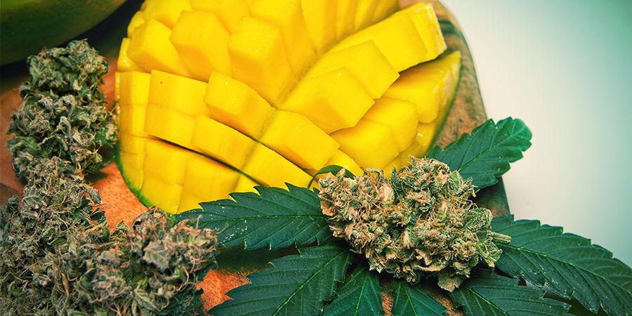 Myrcene In Cannabis