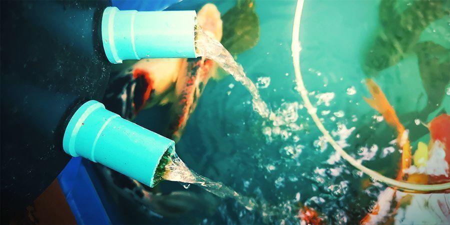 Gib Die Fische Hinein