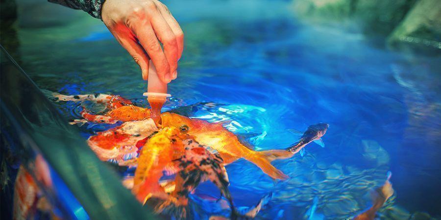 Tipps Für Deinen Aquaponik-Grow