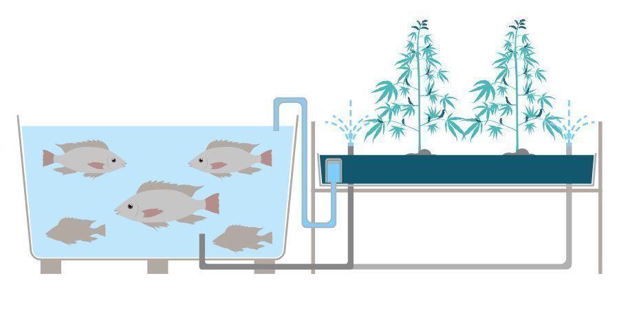 Was Ist Aquaponik?