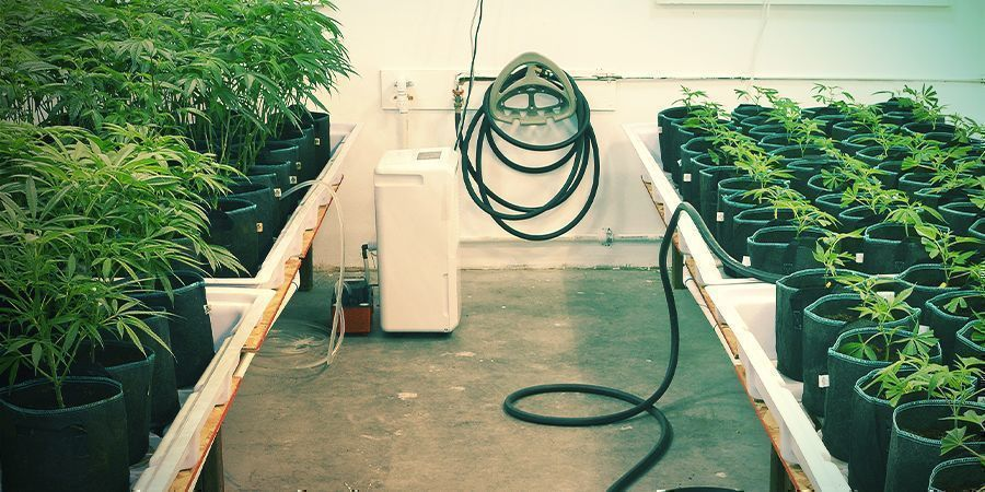 Alles sauber halten - Vertikaler Cannabisanbau