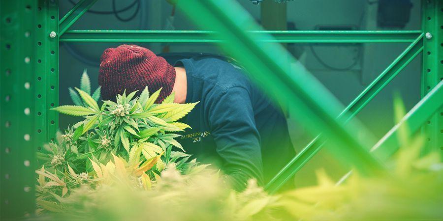 Rack Setup - Vertical Cannabis Growing