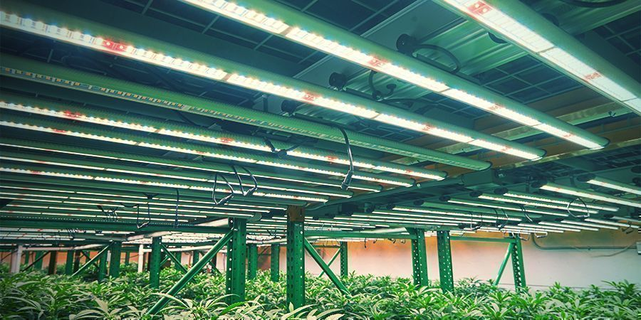 Vertikaler Cannabisanbau