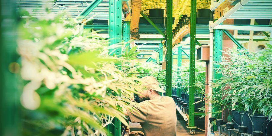 Was Ist Vertikaler Cannabisanbau?