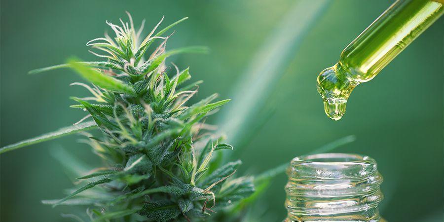 Edibles Mit Cannabiskonzentraten: Berechne die korrekte Dosis