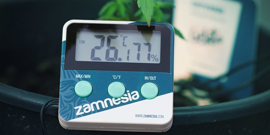 Faktoren, Die Die Cannabisblüte Beeinflussen Können: Umgebungstemperatur