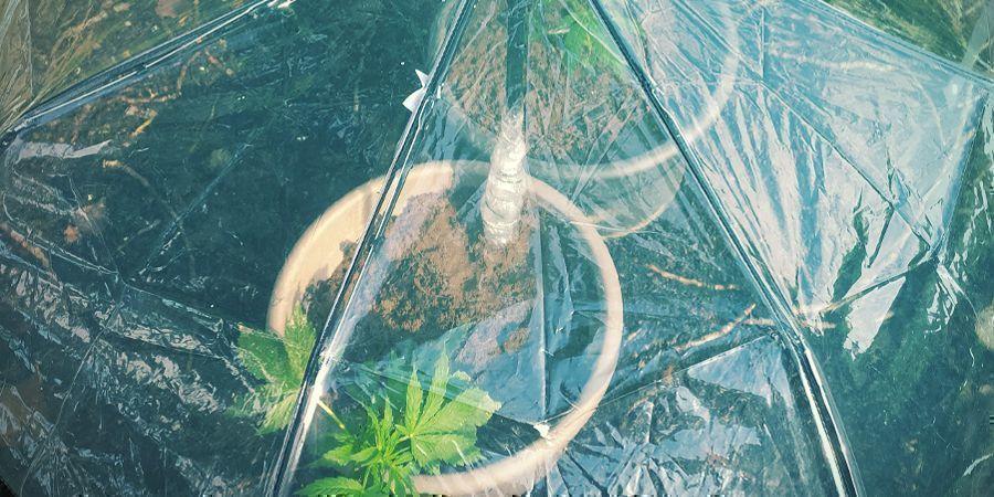 5 DIY Methods - How To Water Cannabis Plants