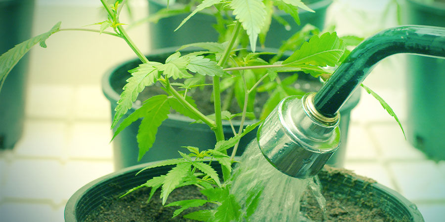 Water - Growing Cannabis