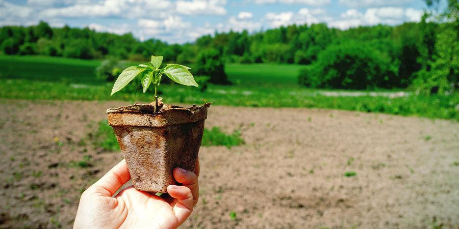 Growing Peppers For Beginners: Harden Off Seedlings