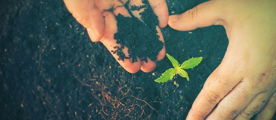 r/cannabiscultivation: Alles An Einem Ort, Was Man Über Den Cannabisanbau Wissen Muss
