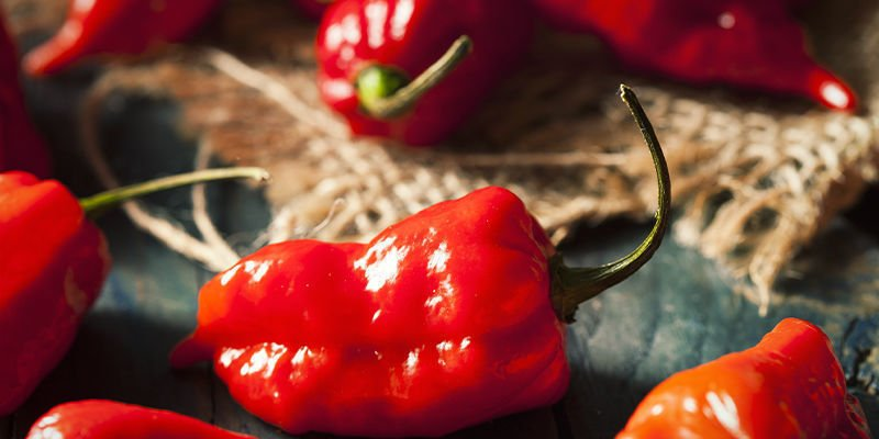Begin Your Ghost Pepper Cultivation Project Today
