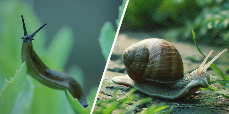 Are Slugs And Snails The Same?