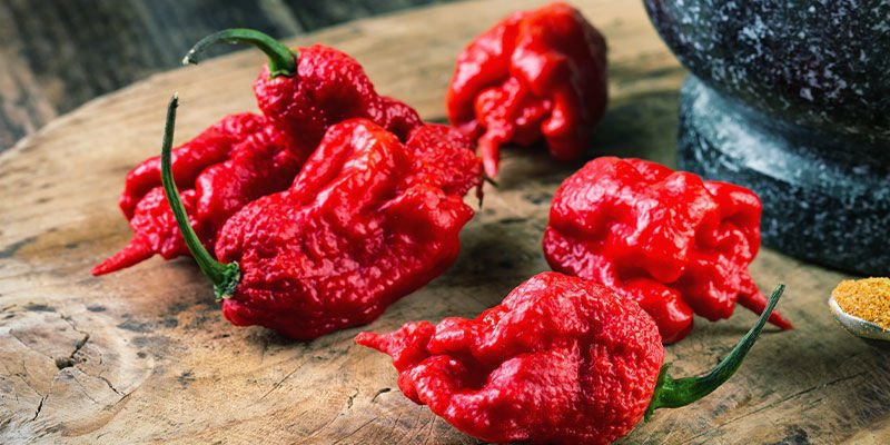 Hottest Peppers: Komodo Dragon