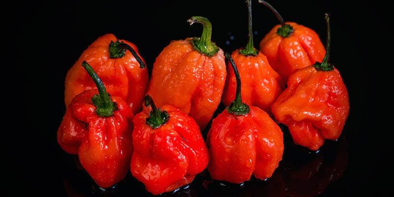 Hottest Peppers: Naga Viper