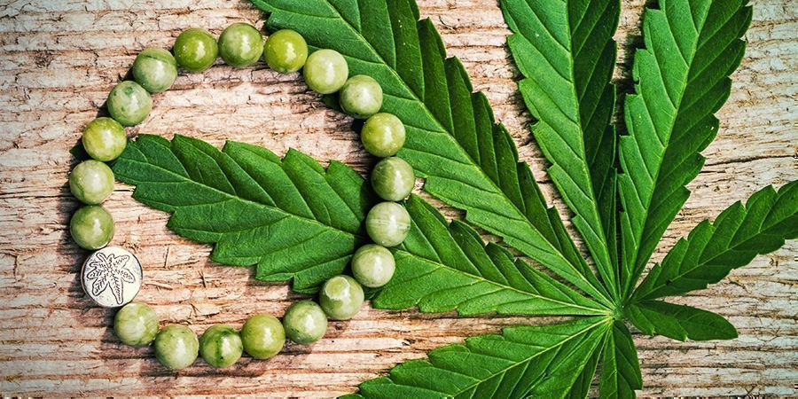 Hemp is Hip: a Plant With a Million Uses