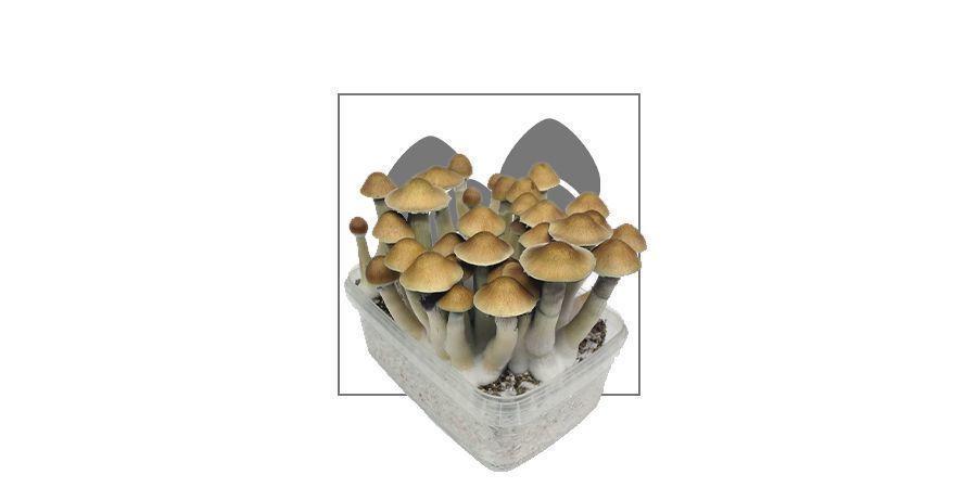 Supa Gro Magic Mushroom Grow Kits