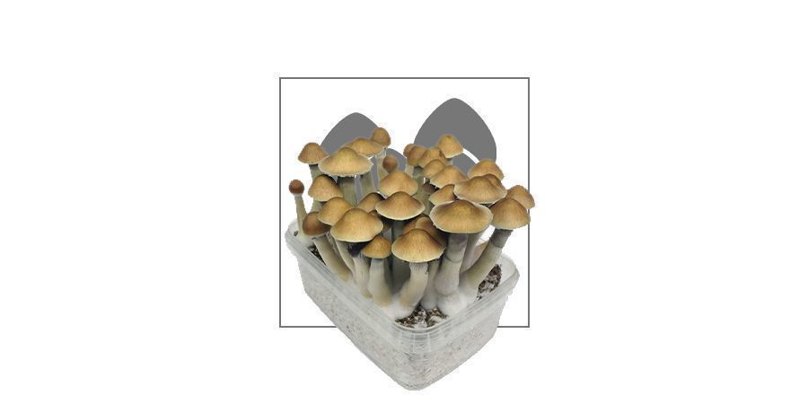 Supa Gro Magic Mushroom Zuchtsets