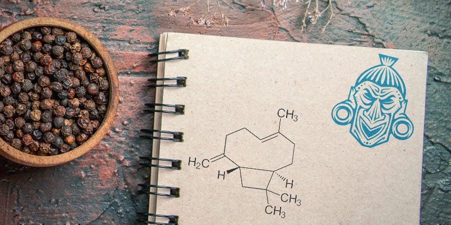 What Is Beta-Caryophyllene?