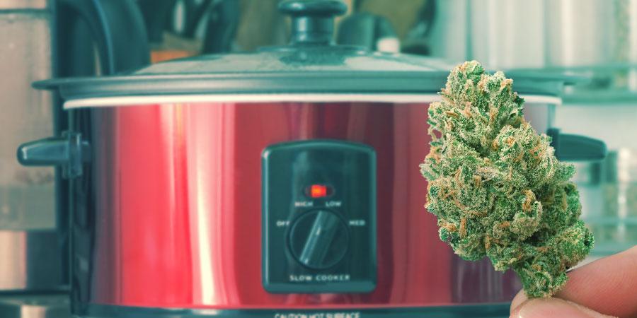 How To Make Alcohol-Free Cannabis Tincture - Zamnesia Blog