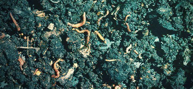 What Are Organic Fertilisers?