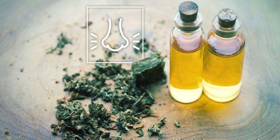 Spannungsabbau mit Cannabis: Denke an die Terpene